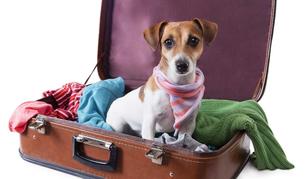 10 Tips for Safe Air Travel with Your Pet