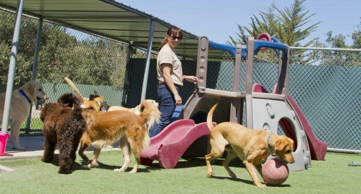 Dog Training Tips – How To Train a Dog