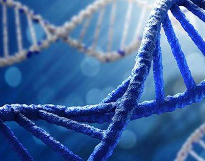 DNA test in seeking results